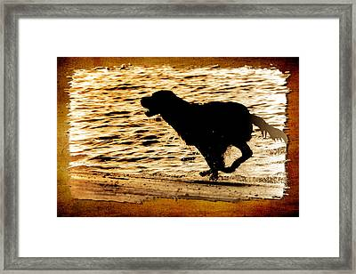 Framed Print featuring the photograph Labrador Silhouette by Eleanor Abramson