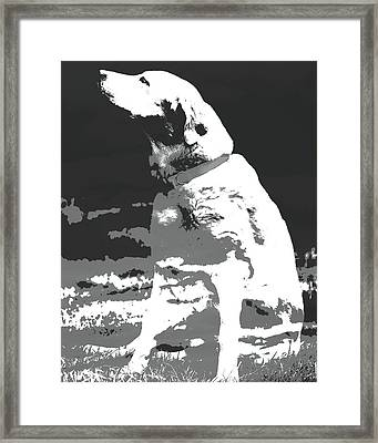 Labrador Smell The Air Framed Print by Terry DeLuco