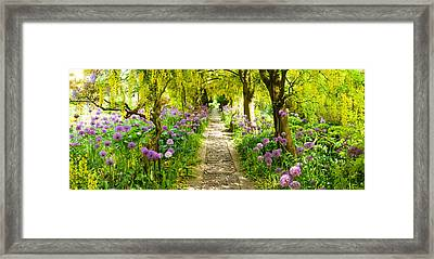 Laburnum Trees At Barnsley House Framed Print