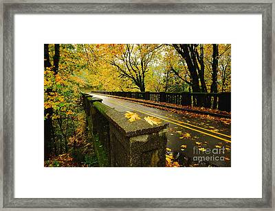 Leaves Of Gold Framed Print