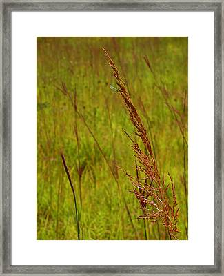 Lace And Brushes Framed Print by Tim Good