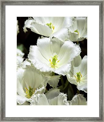 Lace Palm Springs Framed Print by William Dey