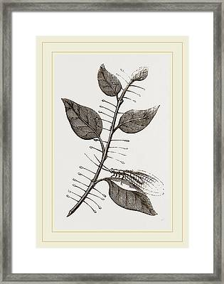 Lace-winged Fly And Eggs On Lilac Framed Print by Litz Collection