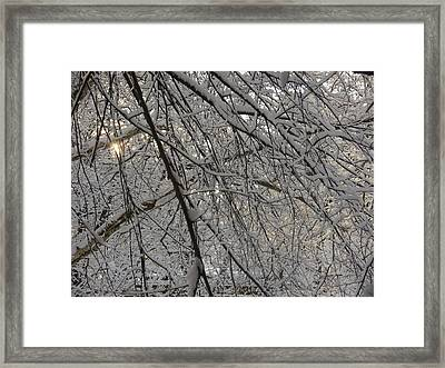 Framed Print featuring the photograph Lace by Winifred Butler
