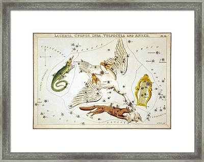 Lacerta Cygnus Lyra Vulpecula And Anser Framed Print by Celestial Images
