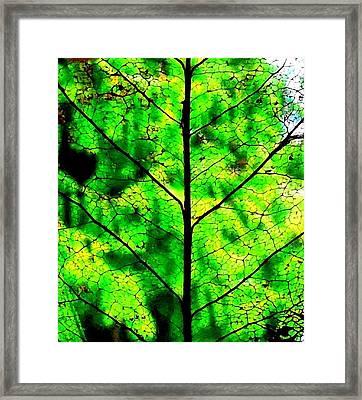 Lacey Leaf Framed Print by Karen Molenaar Terrell