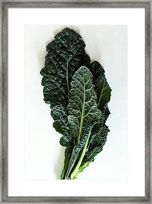 Lacinato Kale Framed Print