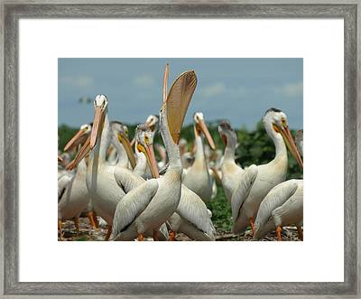 Lacrosse Framed Print by James Peterson