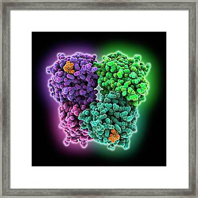Lactose Binding Protein Molecule Framed Print by Laguna Design