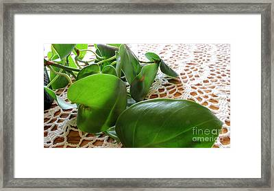 Lacy Plant Framed Print