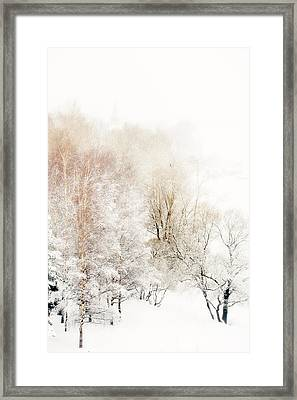 Lacy Winter 1 Framed Print