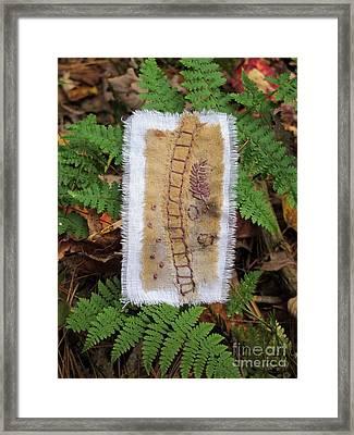 Ladder And Ferns Framed Print by Linda Marcille