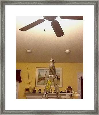 Ladder Cat Framed Print by Stacy C Bottoms
