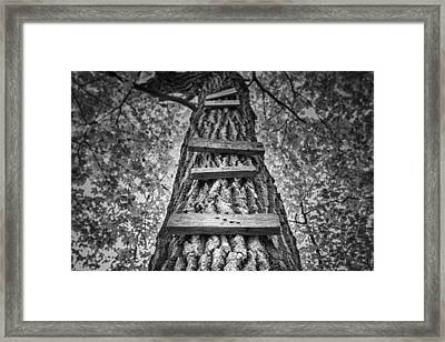 Ladder To The Treehouse Framed Print