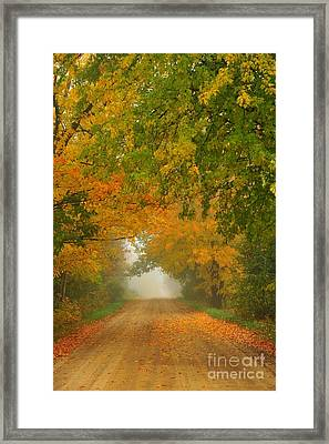 Low Autumn Tunnel Framed Print by Terri Gostola