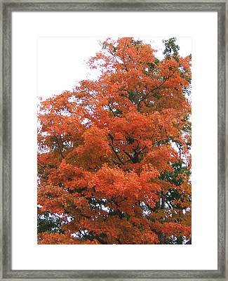 Lady Autumn - Tree Framed Print by Margaret McDermott