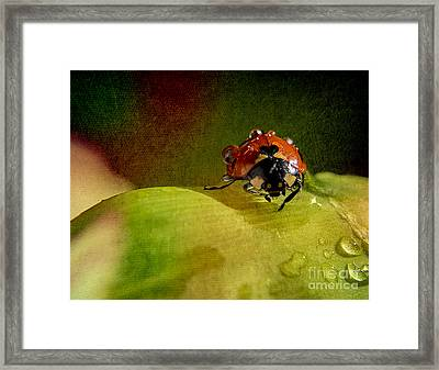 Lady Framed Print by Billie-Jo Miller