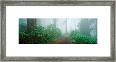 Lady Bird Johnson Grove, California Framed Print by Panoramic Images