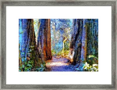 Lady Bird Johnson Grove Framed Print