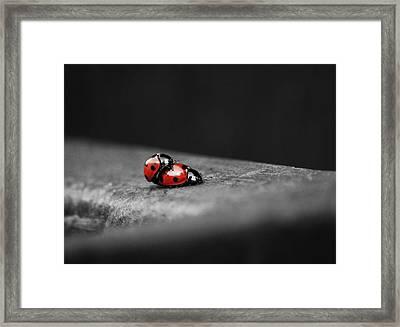 Lady Bird Loving Framed Print by Martin Newman