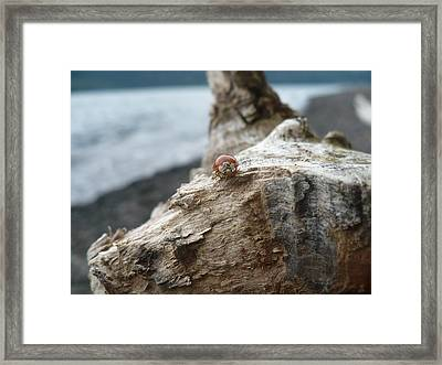 Lady Bug A Drift Framed Print by Nicki Bennett