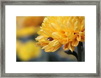 Lady Bug Framed Print by Adrienne Franklin