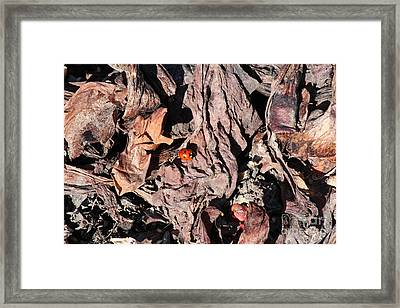 Framed Print featuring the photograph Lady Bug In Spring by Ann E Robson