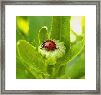 Lady Bug In The Garden Framed Print