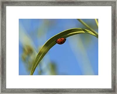 Lady Bug Lady Bug Framed Print