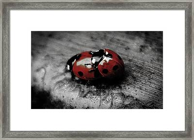 Lady Bug Love Framed Print by Martin Newman