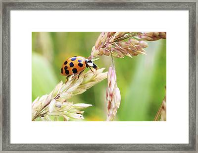 Lady Bug On A Warm Summer Day Framed Print by Andrew Pacheco