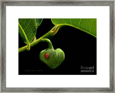 Lady Bug On Pond Apple Framed Print by Grace Dillon