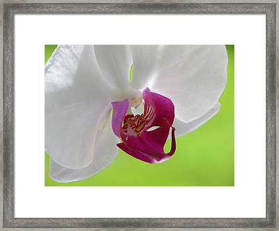 Lady In Green Framed Print by Lucy Howard