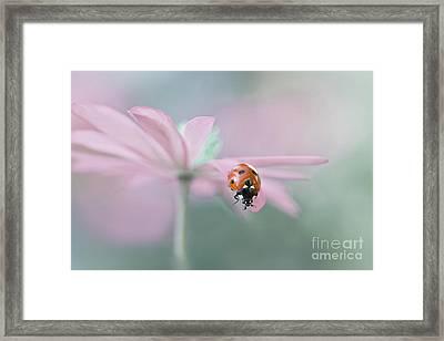 Lady In Pink Framed Print by Jacky Parker