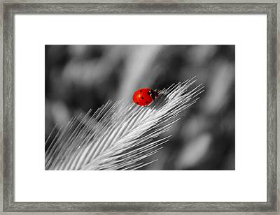 Lady In Red Framed Print