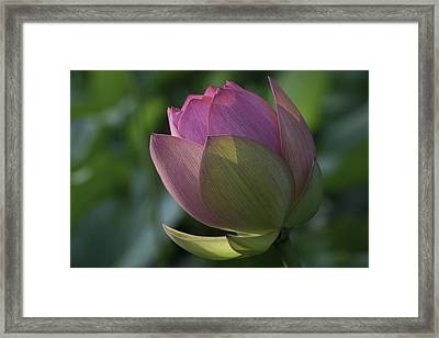 Framed Print featuring the photograph Lady In Waiting by Cindy Lark Hartman