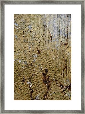 Framed Print featuring the photograph Lady Leaf by Jani Freimann