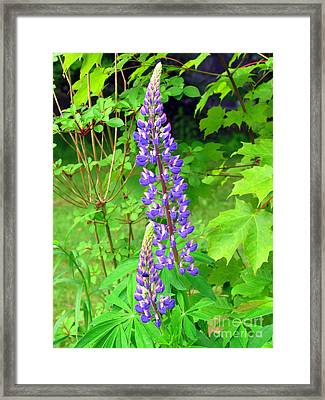 Lady Lupine Framed Print
