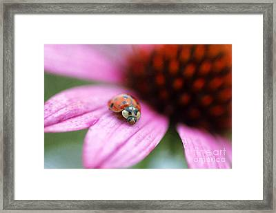 Lady Of Summer Framed Print by Darren Fisher