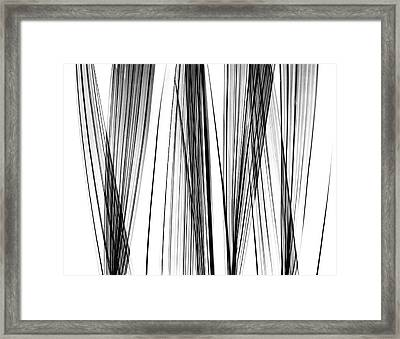 Lady Palm Fronds Framed Print by Albert Koetsier X-ray