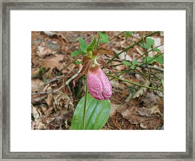 Lady Slipper Framed Print by Chrissy Dame
