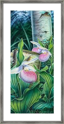 Lady Slipper Framed Print