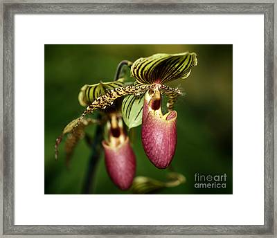 Lady Slipper Orchid Twins Framed Print