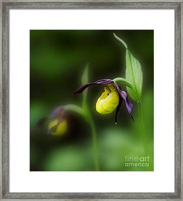 Wildflowers Lady Slipper Wild Orchid Framed Print by Bob Christopher