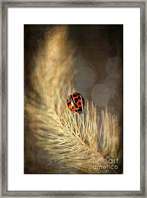 Ladybird Framed Print by Darren Fisher