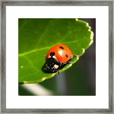 Ladybird Framed Print by Eva Csilla Horvath