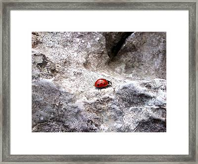 Ladybird Framed Print by Lucy D