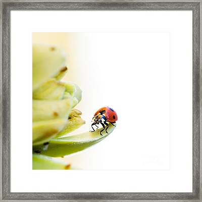 Ladybird On Desert Flower Framed Print by Jane Rix