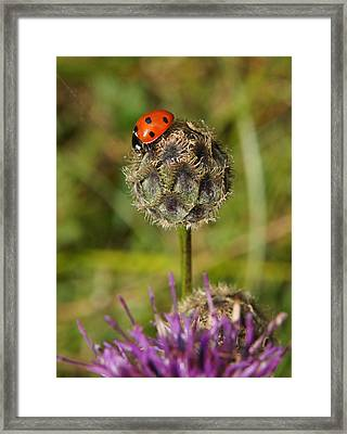 Framed Print featuring the digital art Ladybird by Ron Harpham