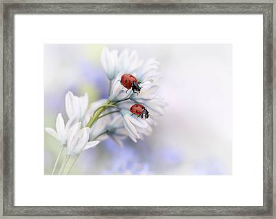 Ladybirds Framed Print by Ellen Van Deelen